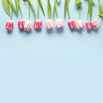 青い背景の上のピンクのチューリップの春の正方形のフレーム。花柄。