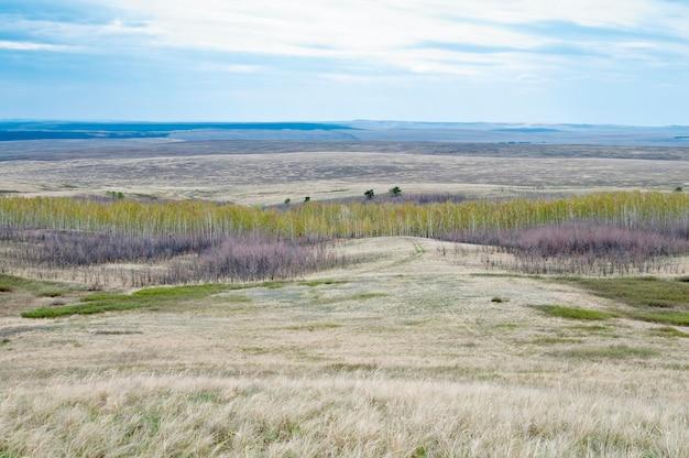 春の草原の風景