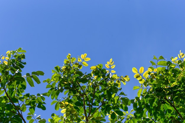 Spring summer background with green tree and sky