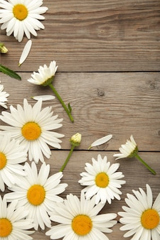 Spring and summer chamomile flowers on grey wooden background. top view