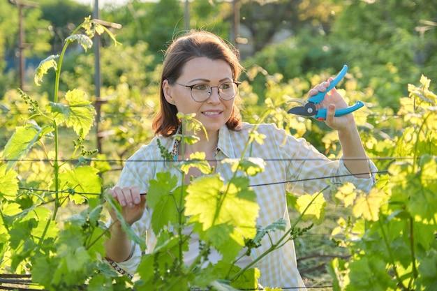 ブドウ園での春夏の庭仕事