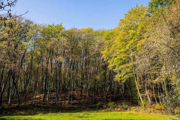 La fageda d en jordaforestの春の日の出