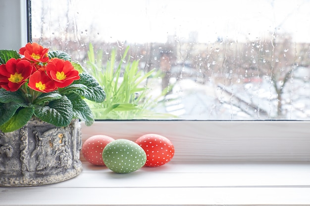 Spring surface with red primrose flowers in pot and easter eggs on the window with raindrops, space