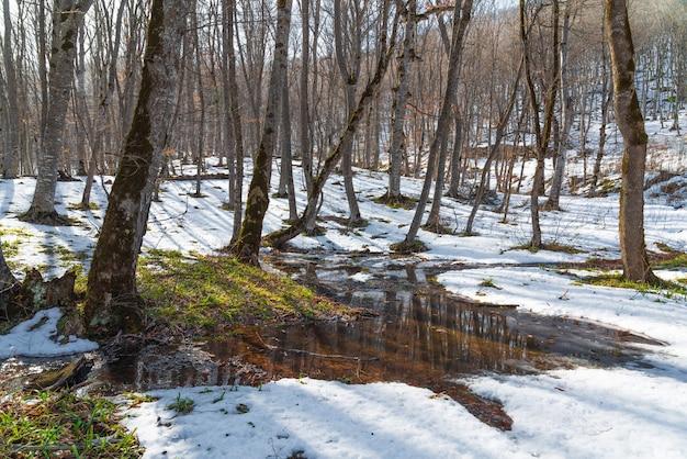Весенняя оттепель в лесу