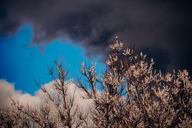 春の雷雨。