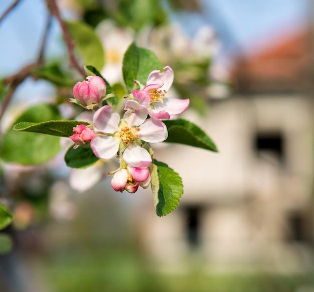 봄 시간입니다. 핑크 꽃이 만발한 트리 브런치