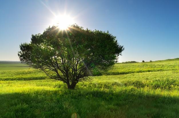 봄 나무와 초원입니다. 자연 구성입니다.