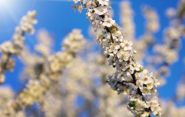 Весеннее дерево в цветке. состав природы.