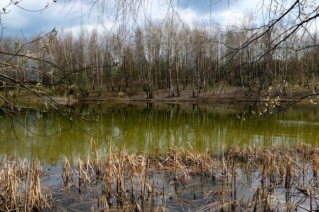 青い空を背景に、春の木々が湖に映っています。自然の目覚め。高品質の写真