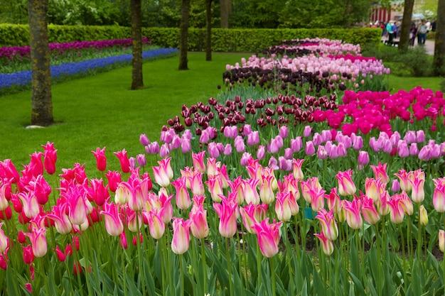 オランダのダッチスプリングガーデンキューケンホフの春のチューリップ