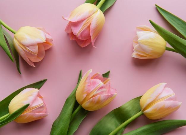 ピンクの背景に春のチューリップ