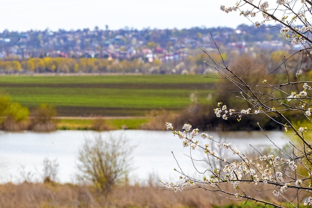 川沿いの花木と春の景色