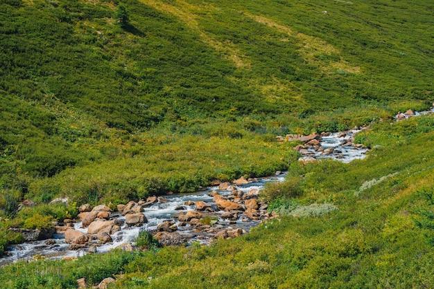 Поток родниковой воды быстрый возле зеленого склона горы в солнечный день. богатая высокогорная флора.