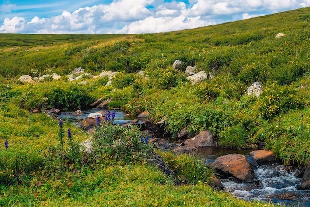 화창한 날에 그린 밸리에서 봄 물 흐름. 풍부한 고원 식물. 마운틴 크릭 근처의 놀라운 산악 식물.