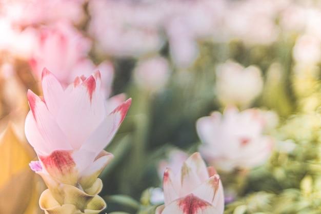 봄 흰색 분홍색 꽃 여름 시간