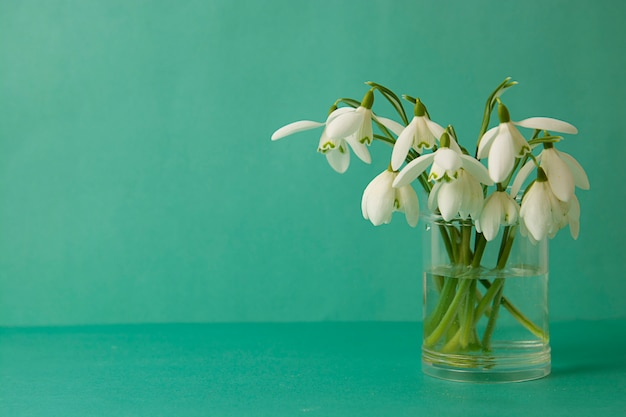 Spring white snowdrops over blue background. copy space.