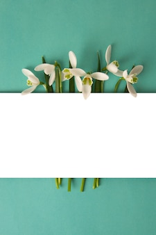Spring white snowdrops over blue background.