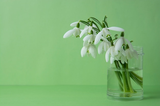 Spring white snowdrops over green background. copy space.