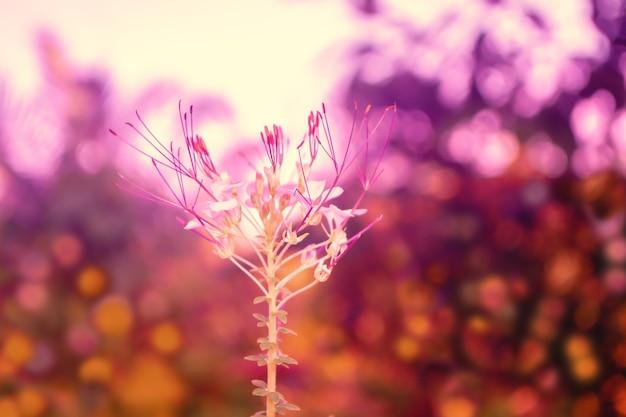 カラフルなボケ味の背景を持つ春の白い熱帯の花