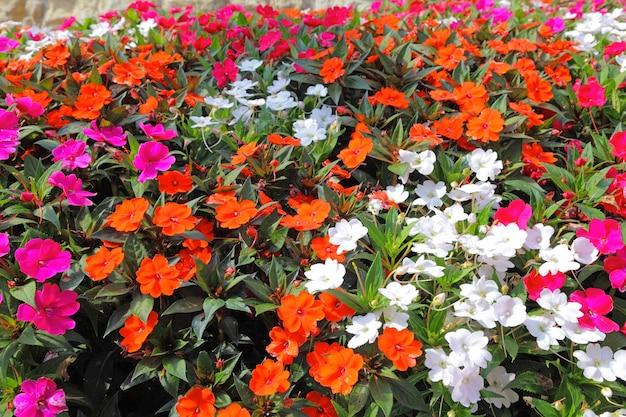 봄 야생 꽃 배경입니다.