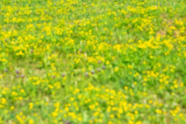 자연 빨간색 녹색과 노란색 식물의 봄 야생화 필드