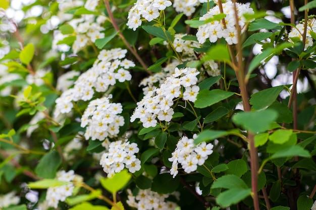 木の上に白い花がたくさん咲く春