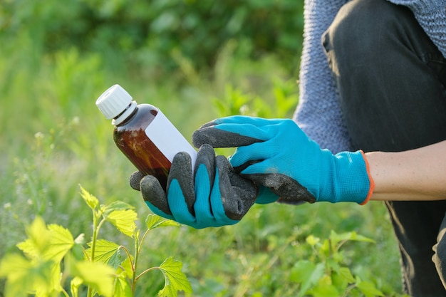 Spring work in the garden, bottle of chemical fertilizer, fungicide in hand of woman gardener