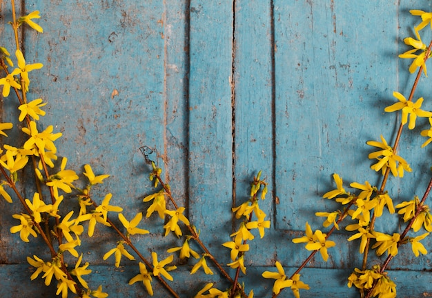 古い青い木製の背景に黄色の花を春します。