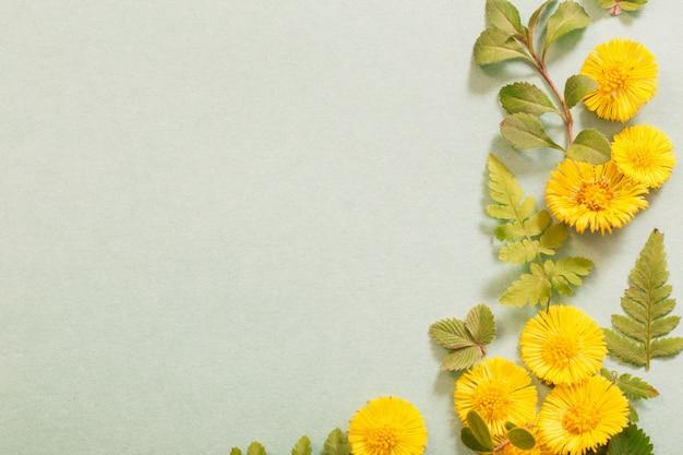 Весенние желтые цветы на фоне бумаги