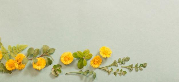 紙の背景に黄色の花を春します。