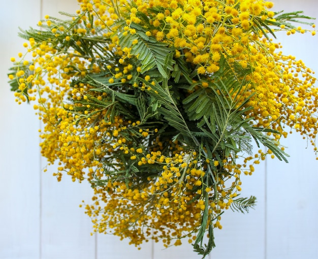 Spring yellow mimosa flowers