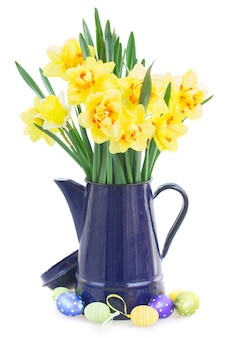 白い背景で隔離のイースターエッグと青い鍋の春の黄色い水仙