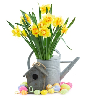 Spring yellow narcissus in watering can with birdhouse and easter eggs isolated on white background
