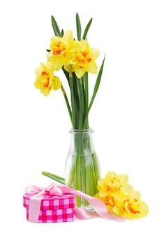 白い背景で隔離のピンクのギフトボックスと春の黄色い水仙