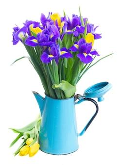 白で隔離される青い鍋の春の黄色いチューリップと青い菖蒲