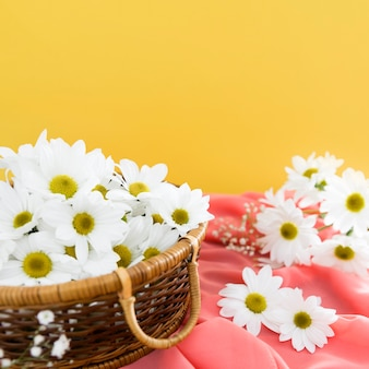 Springtime concept with basket of daisies