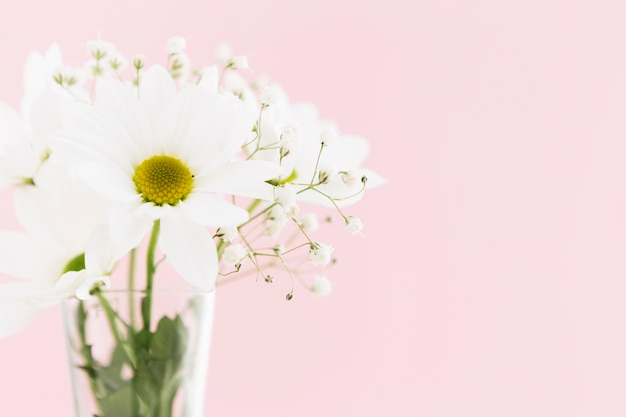 Springtime concept with beautiful daisies