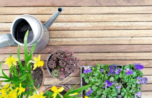 Springtime flowerpots on a wooden terrace