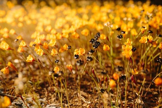 작은 노란색 꽃과 함께 봄 날 자연 배경