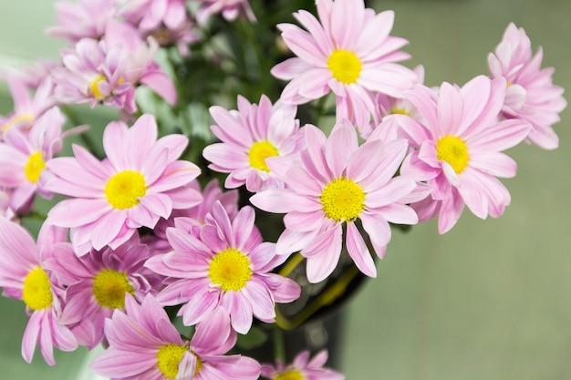 Springtime pink flowers background