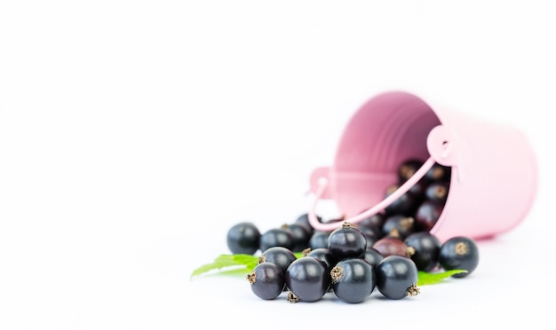 Sprinkled bucket of currants on gray background