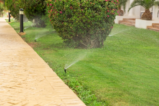 Sprinkler in garden watering the lawn. automatic watering lawns concept