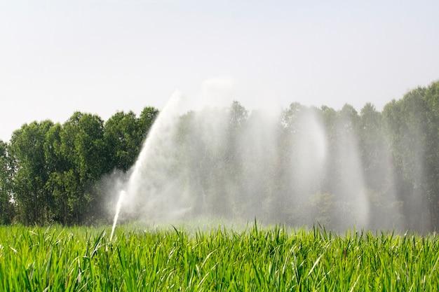 Sprinkler head watering the grass in farm