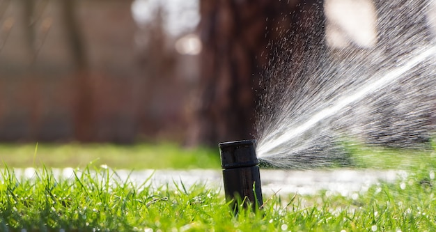 Sprinkler sprinkles water on the lawn. automatic lawn watering system. space for text.