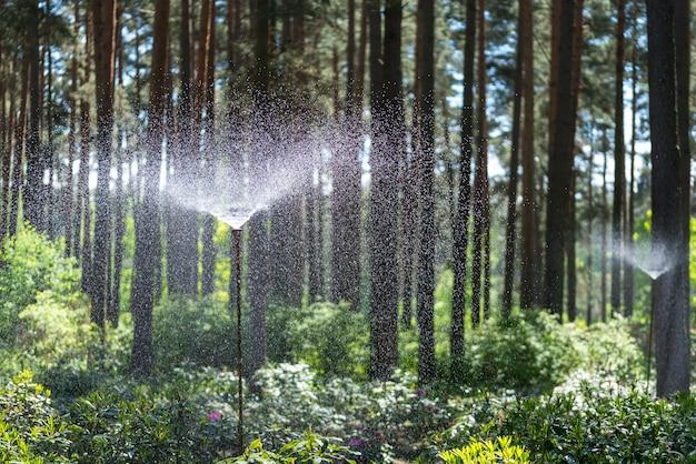 Дождевальная система полива в лесном саду Premium Фотографии