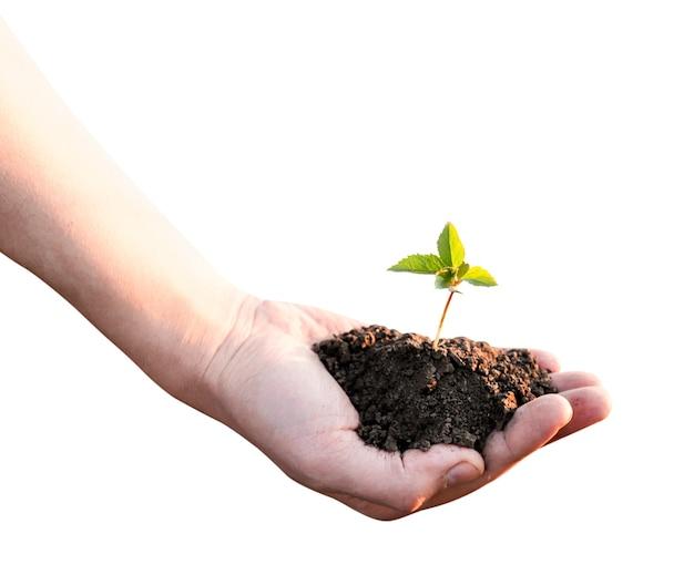 白い背景の上の手のクローズアップで芽と一握りの地球。孤立