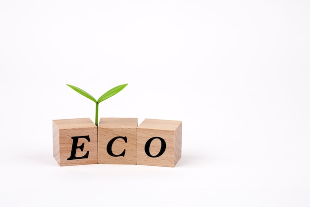 Sprout on eco word written in wooden cubes