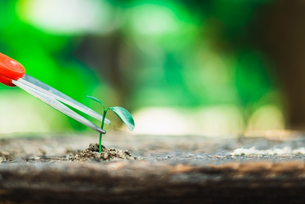 Sprout growing on ground and hand holding scissor going to cut it , destroy new life and hope concept