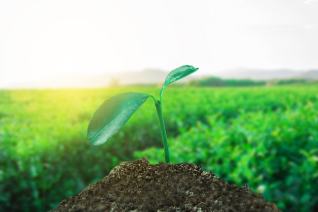 Sprout growing on ground with tea field background, new life and hope concept