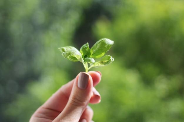 緑の背景に手で発芽